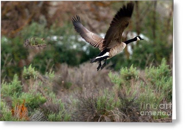 Haybale Greeting Cards - Take Off Greeting Card by Robert Bales