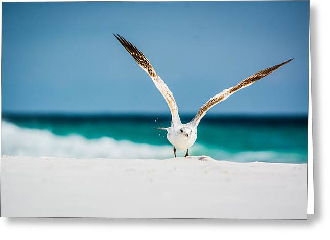 Flying Seagull Greeting Cards - Take Off Greeting Card by Shelby  Young