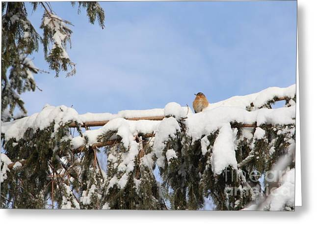 Wintry Greeting Cards - Take Time to Rest Greeting Card by Jari Hawk