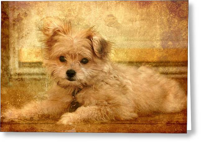 Puppies Digital Greeting Cards - Taking A Break Greeting Card by Angie Tirado