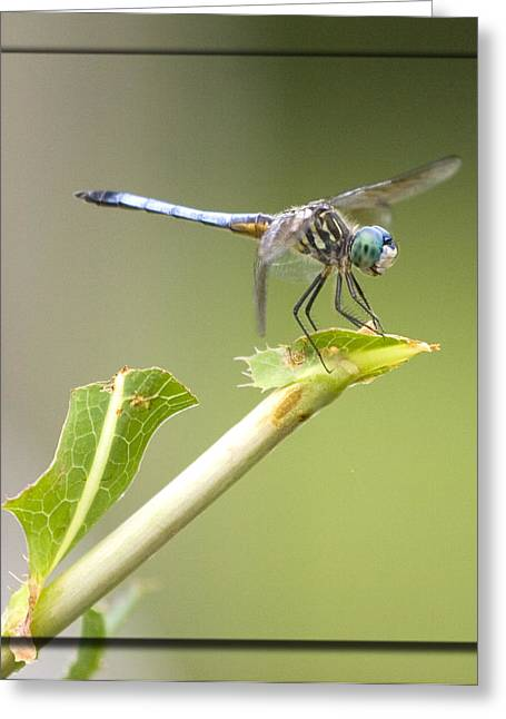 Insect Greeting Cards - Taking a rest Greeting Card by John Holloway