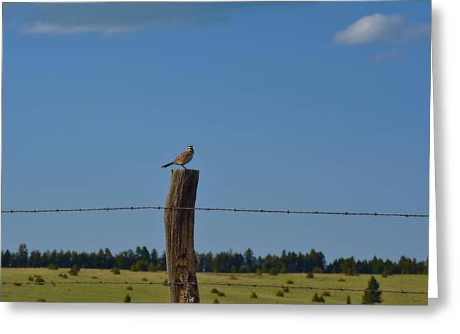Horned Larks Greeting Cards - Taking in the View Greeting Card by Tammie McKinnon