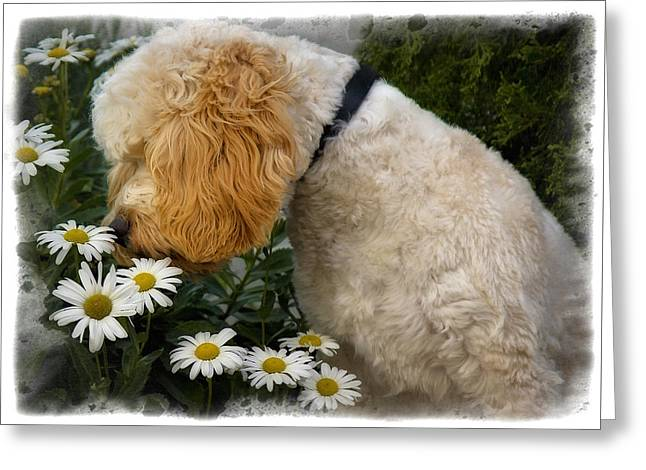 Puppies Digital Greeting Cards - Taking Time To Smell The Flowers Greeting Card by Susan Candelario