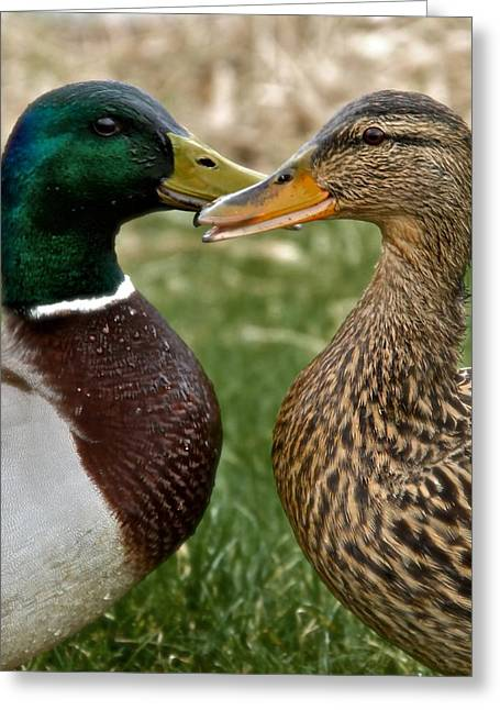 Yak Photographs Greeting Cards - Talk Talk Greeting Card by Odd Jeppesen