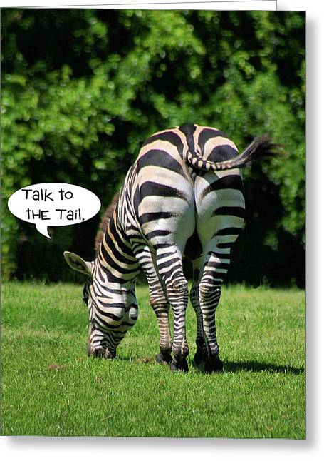 Zebra Eating Greeting Cards - Talk to the Tail Greeting Card by Kristin Elmquist