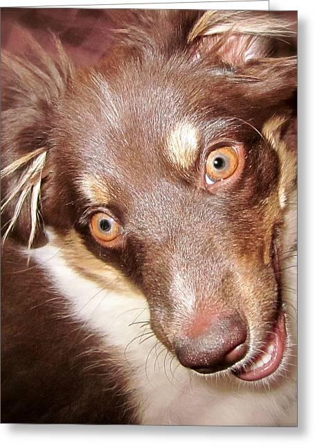 Talking Dog Greeting Card by Gwyn Newcombe