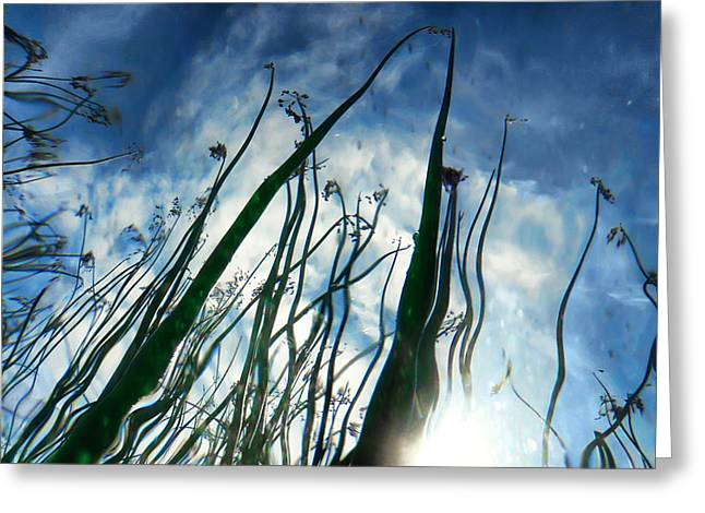Blue Green Wave Greeting Cards - Talking Reeds Greeting Card by Tammy Wetzel