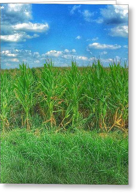 Gravel Road Greeting Cards - Tall Corn Greeting Card by Jame Hayes