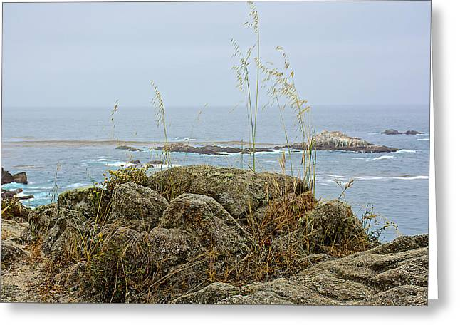 Beaches In Monterey Greeting Cards - Tall Grass from Beach Rocks in Point Lobos State Reserve near Monterey-California  Greeting Card by Ruth Hager