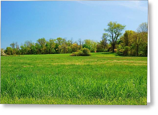 Tall Grass In The Field - Bayonet Farm Greeting Card by Angie Tirado