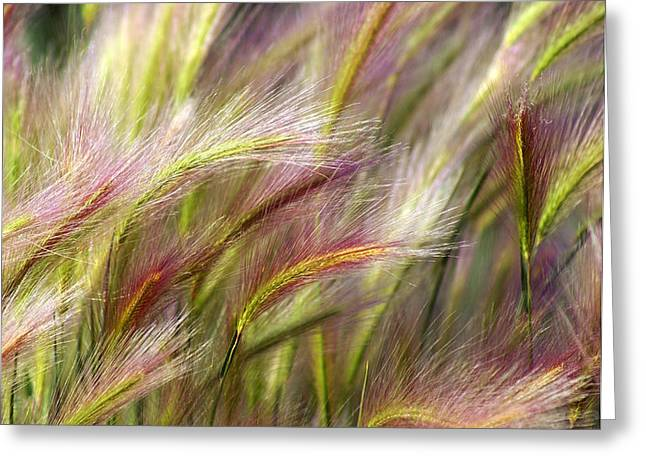 Tall Grass Greeting Card by Marty Koch