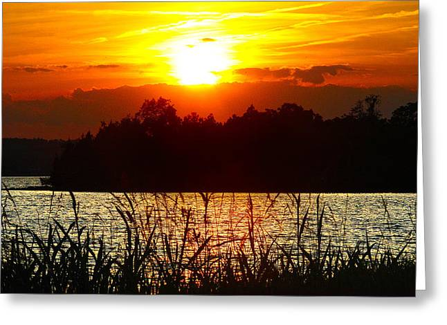 Sunset Reflecting In Water Greeting Cards - Tall Grass Sunset 2 Smith Mountain Lake Greeting Card by James Roney