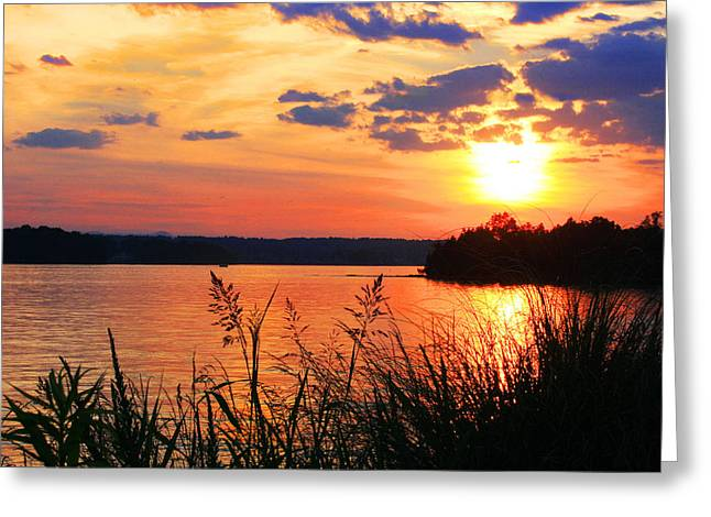 Sunset Reflecting In Water Greeting Cards - Tall Grass Sunset Smith Mountain Lake Greeting Card by James B Roney