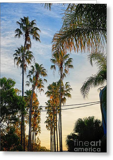 Reach Greeting Cards - Tall Palms at Sunset Greeting Card by Kaye Menner