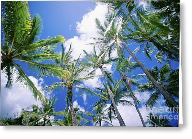 Vince Greeting Cards - Tall Palms Greeting Card by Vince Cavataio - Printscapes