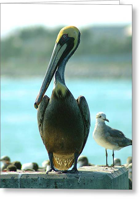 Photos Of Birds Greeting Cards - Tall Pelican Greeting Card by Susanne Van Hulst