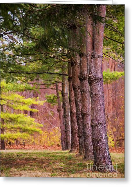Tall Pines Standing Guard Greeting Card by Sharon McConnell