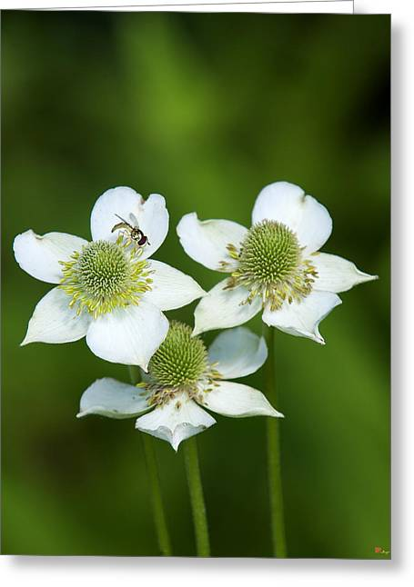 Thimbleweed Greeting Cards - Tall Thimbleweed DSMF0228 Greeting Card by Gerry Gantt