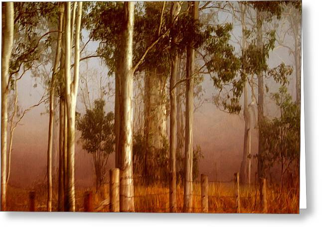Fog Mist Greeting Cards - Tall Timbers Greeting Card by Holly Kempe