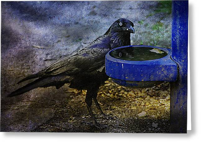Crow Mixed Media Greeting Cards - Taming Of The Crow Greeting Card by Georgiana Romanovna