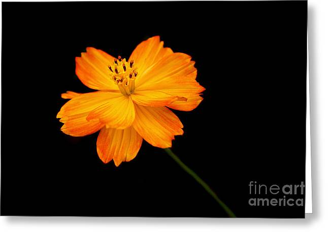 Cullen Greeting Cards - Tangerine Dream Greeting Card by Marion Cullen
