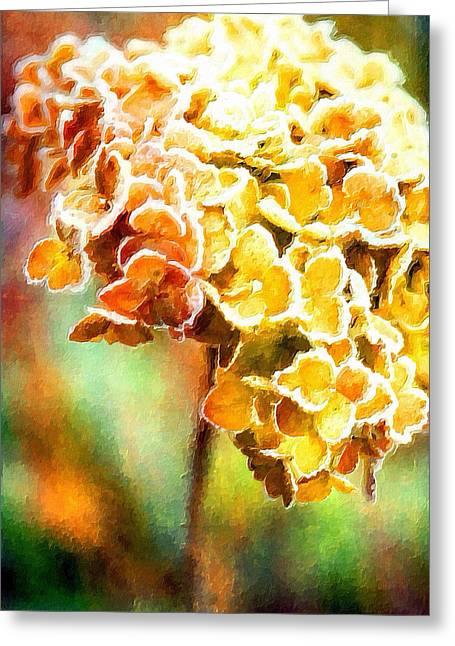 Tangerines Mixed Media Greeting Cards - Tangerine Hydrangeas Greeting Card by Bonnie Bruno