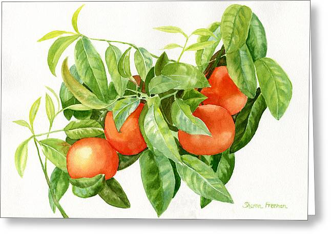 Tropical Fruit Greeting Cards - Tangerines with Leaves Greeting Card by Sharon Freeman