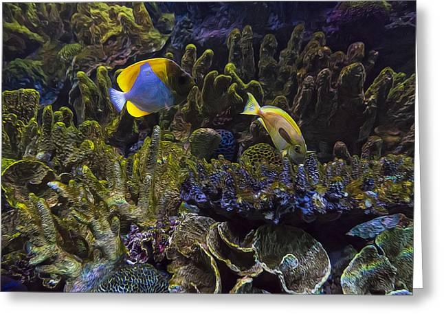 Aquarium Fish Greeting Cards - Tank Life 4 Greeting Card by Janet Fikar