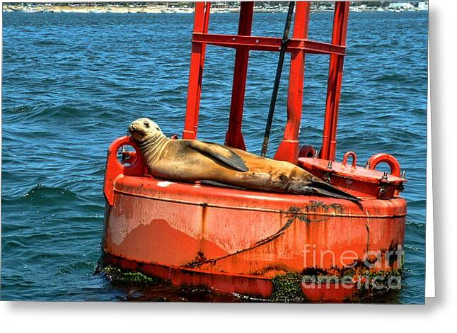 Best Sellers -  - California Sea Lions Greeting Cards - Tanning Sea Lion on Buoy Greeting Card by Mariola Bitner