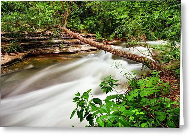 Arkansas Greeting Cards - Tanyard Creek Flowing  Greeting Card by Gregory Ballos