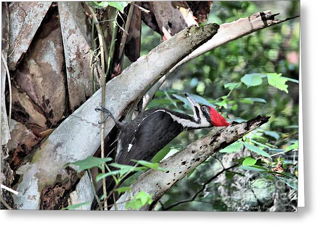 Pileated Woodpecker Greeting Cards - Tap Tap Tap Greeting Card by Deborah Benoit