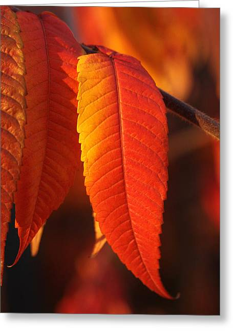 Tapering Light Greeting Card by Connie Handscomb