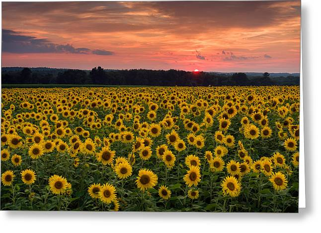 Taps Over Sunflowers Greeting Card by Michael Blanchette