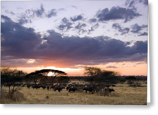 Nature Study Greeting Cards - Tarangire Sunset Greeting Card by Adam Romanowicz