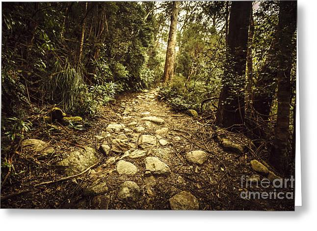 Tasmanian Forest Path Greeting Card by Jorgo Photography - Wall Art Gallery