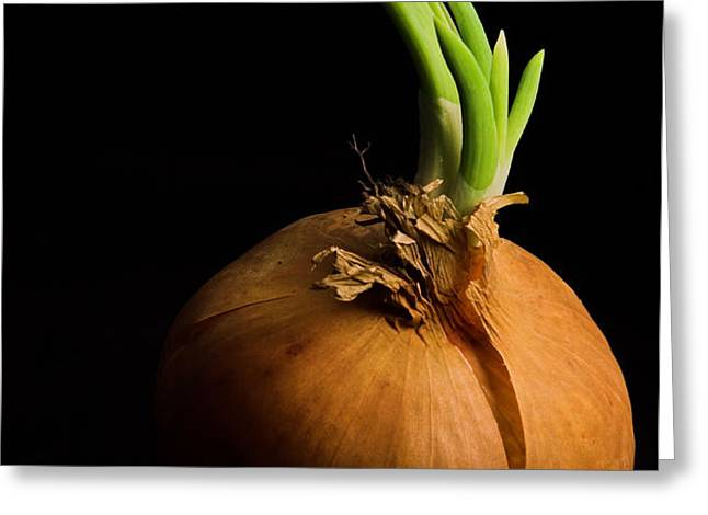 Tasty Onion Greeting Card by Thomas Splietker