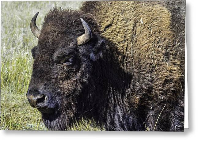 Tatanka Greeting Cards - Tatanka Greeting Card by William Hoffmann