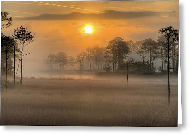 Tate's Hell State Forest Greeting Card by JC Findley