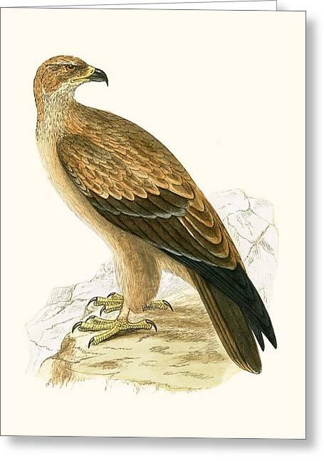 Tawny Eagle Greeting Card by English School