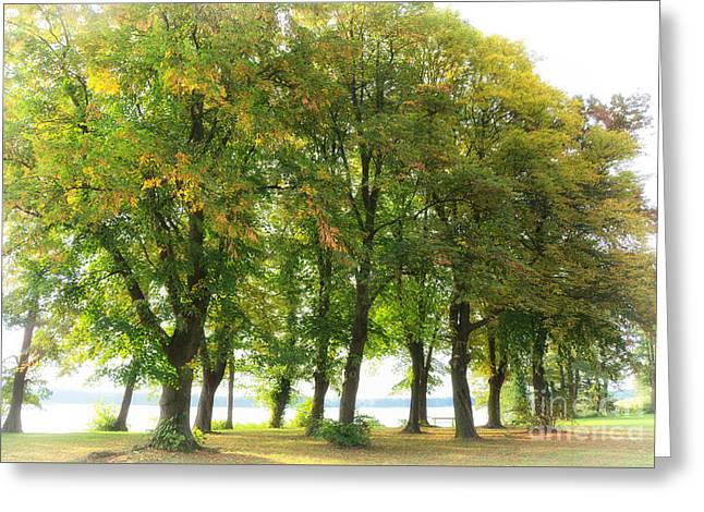 Trees In Autumn Greeting Cards - Te Greeting Card by SK Pfphotography