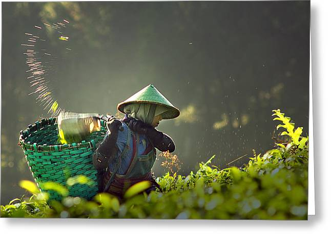 People Greeting Cards - Tea Pickers Greeting Card by Muhammad Raju