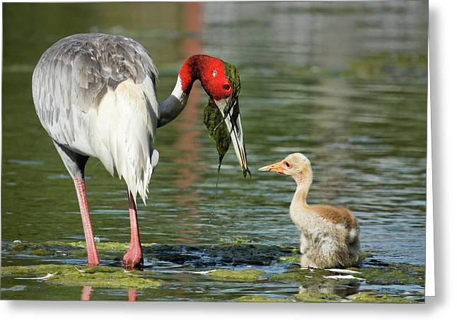 Animals Love Greeting Cards - Teaching the Young Greeting Card by Dawn Currie
