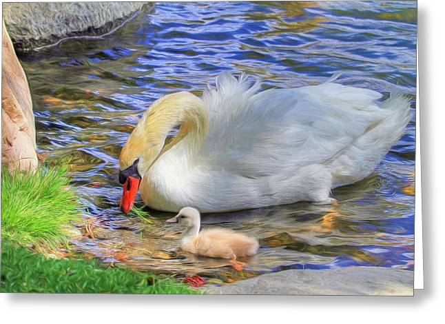 Swans... Greeting Cards - Teachings Greeting Card by Donna Kennedy