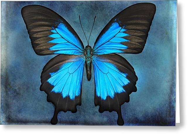 Teal Butterfly Greeting Card by Lisbet Sjoberg
