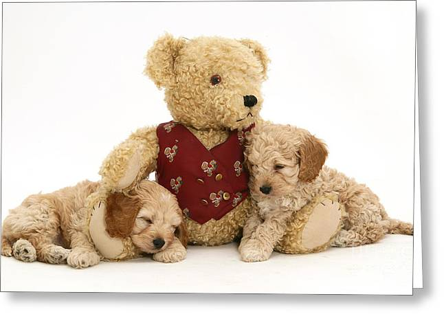 Bred Photographs Greeting Cards - Teddy Bear With Puppies Greeting Card by Jane Burton