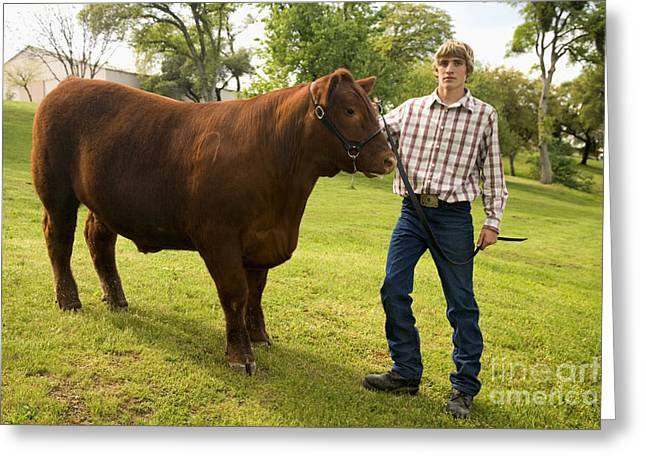 Steer Greeting Cards - Teen And Red Angus Steer Greeting Card by Inga Spence