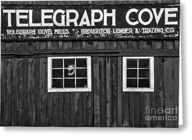 Telegraph Cove Black And White Greeting Card by Adam Jewell