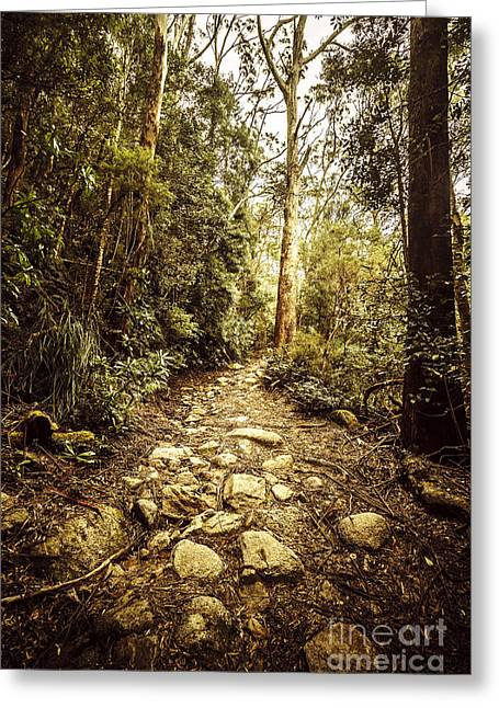 Temperate Mountain Trail Greeting Card by Jorgo Photography - Wall Art Gallery