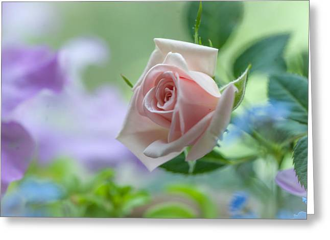 Tender Pink Rose Greeting Card by Jenny Rainbow