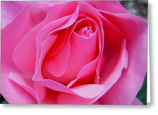 Unfurl Greeting Cards - Tenderness Greeting Card by Kaye Menner